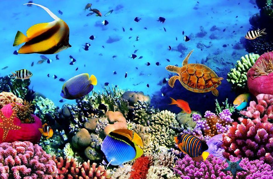 Погрузись в удивительный подводный мир Красного моря!